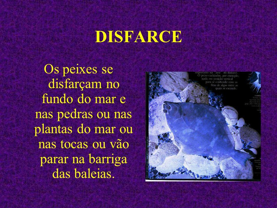DISFARCE Os peixes se disfarçam no fundo do mar e nas pedras ou nas plantas do mar ou nas tocas ou vão parar na barriga das baleias.