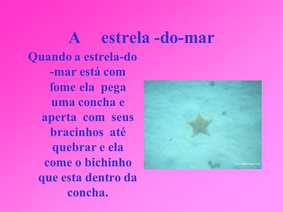 A estrela -do-mar