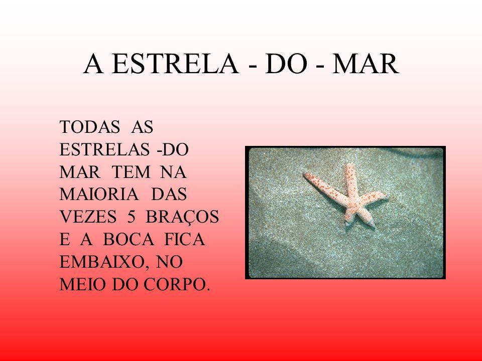 A ESTRELA - DO - MAR TODAS AS ESTRELAS -DO MAR TEM NA MAIORIA DAS VEZES 5 BRAÇOS E A BOCA FICA EMBAIXO, NO MEIO DO CORPO.