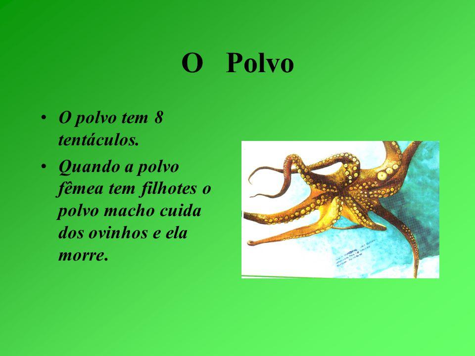 O Polvo O polvo tem 8 tentáculos.