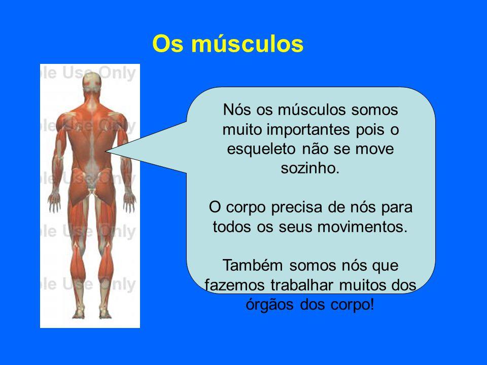Os músculos Nós os músculos somos muito importantes pois o esqueleto não se move sozinho. O corpo precisa de nós para todos os seus movimentos.