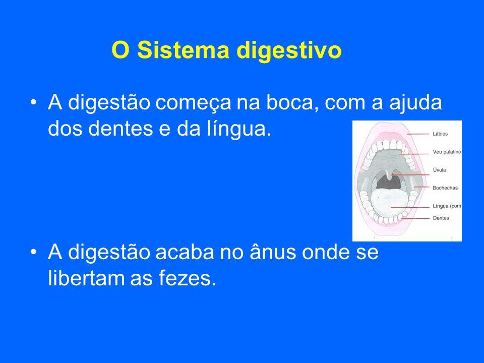 O Sistema digestivo A digestão começa na boca, com a ajuda dos dentes e da língua.