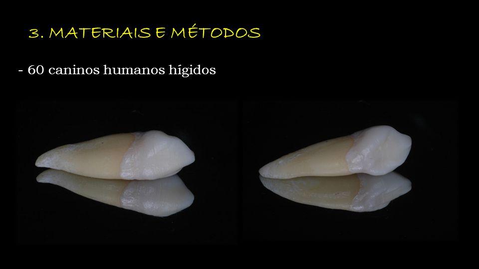 3. MATERIAIS E MÉTODOS - 60 caninos humanos hígidos