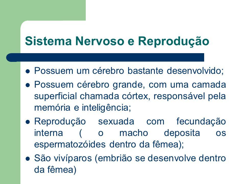Sistema Nervoso e Reprodução