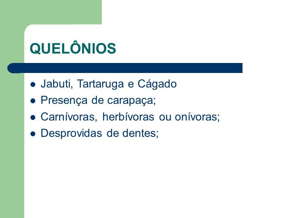 QUELÔNIOS Jabuti, Tartaruga e Cágado Presença de carapaça;