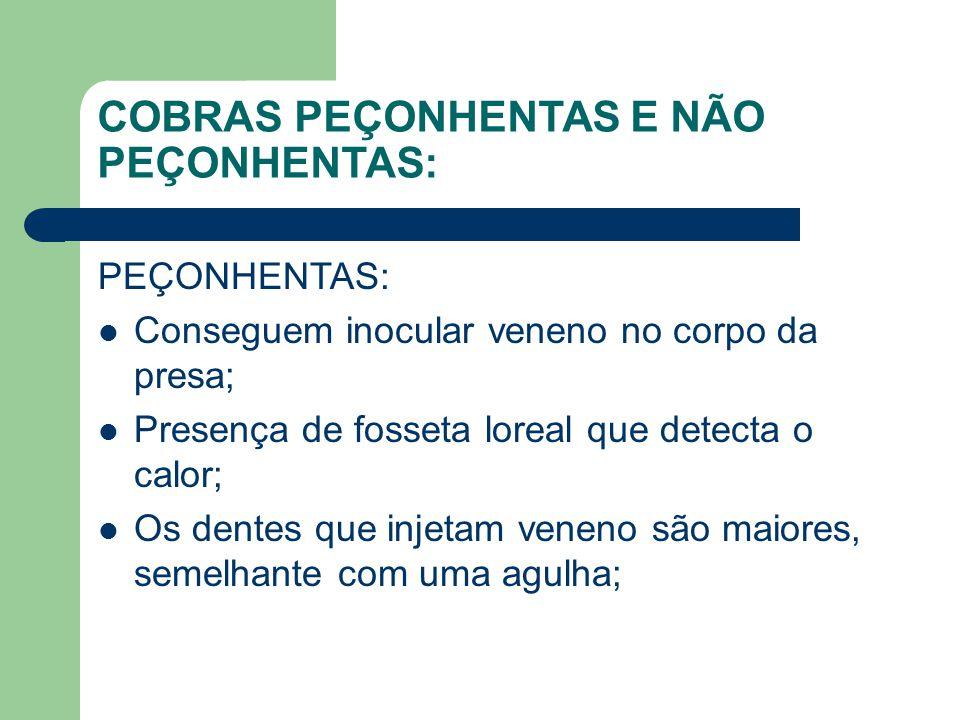 COBRAS PEÇONHENTAS E NÃO PEÇONHENTAS: