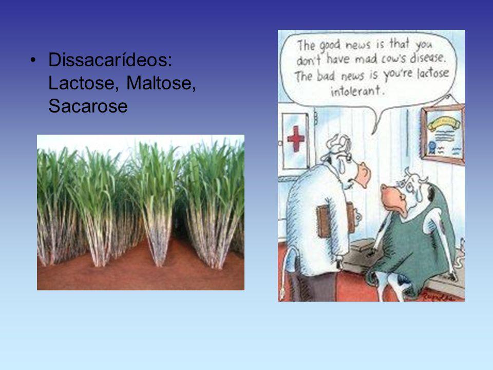 Dissacarídeos: Lactose, Maltose, Sacarose