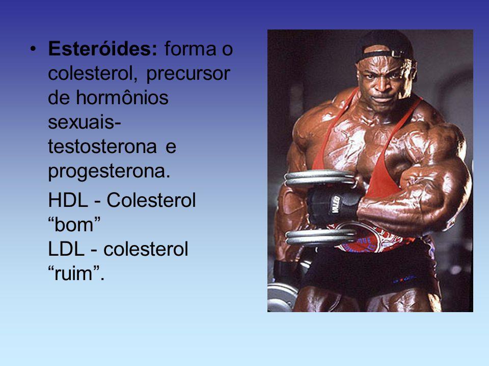 Esteróides: forma o colesterol, precursor de hormônios sexuais- testosterona e progesterona.