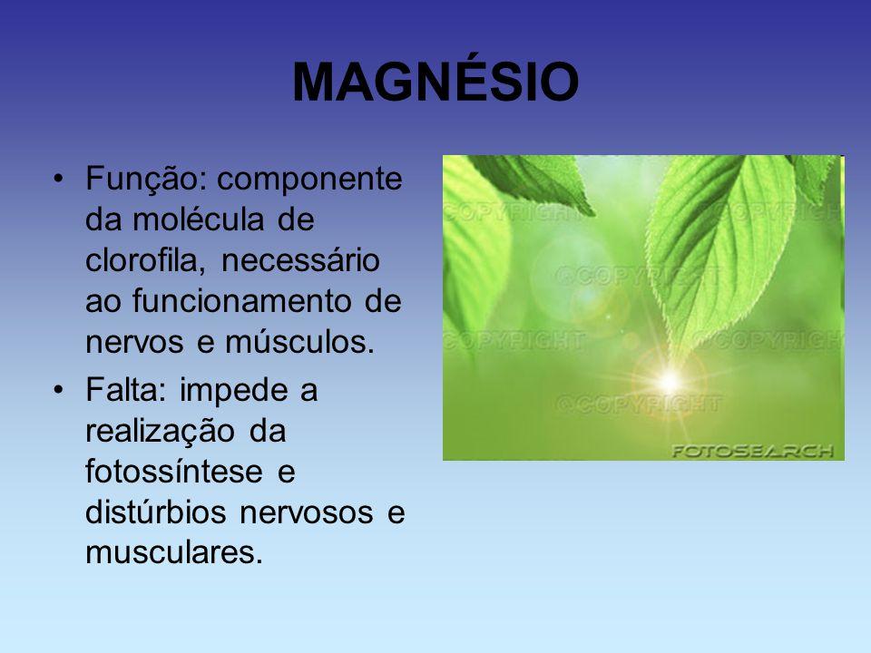 MAGNÉSIO Função: componente da molécula de clorofila, necessário ao funcionamento de nervos e músculos.