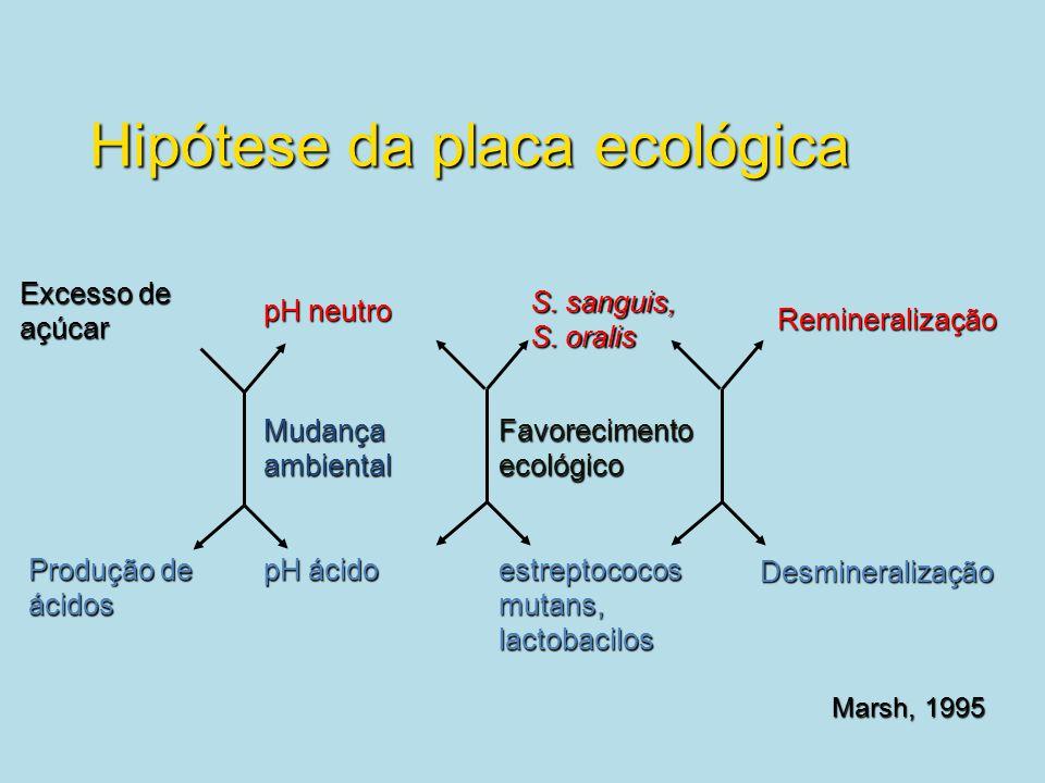 Hipótese da placa ecológica