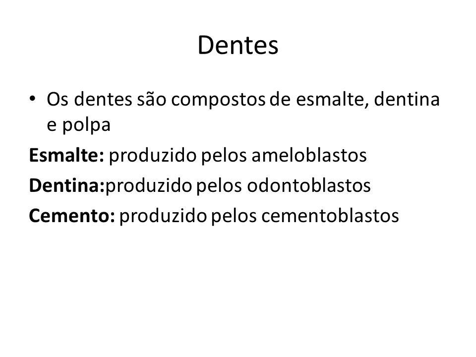 Dentes Os dentes são compostos de esmalte, dentina e polpa