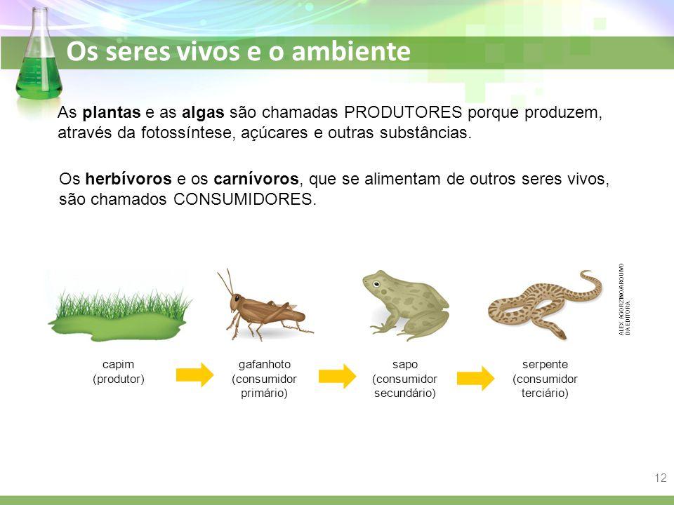As plantas e as algas são chamadas PRODUTORES porque produzem, através da fotossíntese, açúcares e outras substâncias.