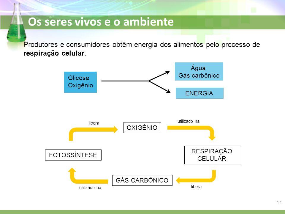 Produtores e consumidores obtêm energia dos alimentos pelo processo de respiração celular.