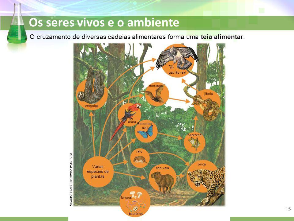 Várias espécies de plantas