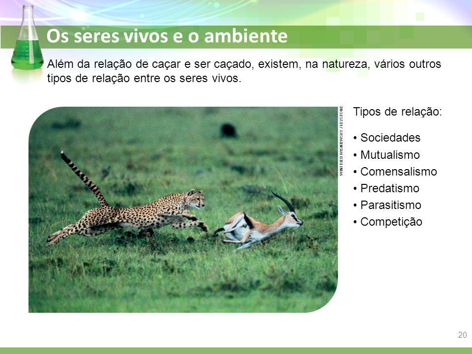 Além da relação de caçar e ser caçado, existem, na natureza, vários outros tipos de relação entre os seres vivos.