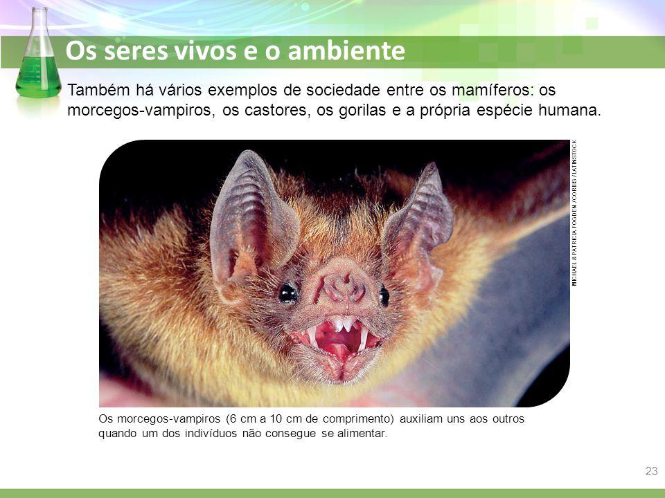 Também há vários exemplos de sociedade entre os mamíferos: os morcegos-vampiros, os castores, os gorilas e a própria espécie humana.