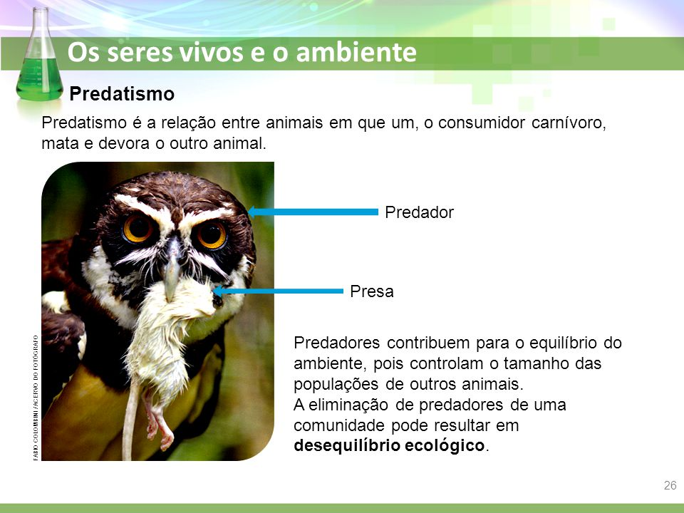 Predatismo Predatismo é a relação entre animais em que um, o consumidor carnívoro, mata e devora o outro animal.