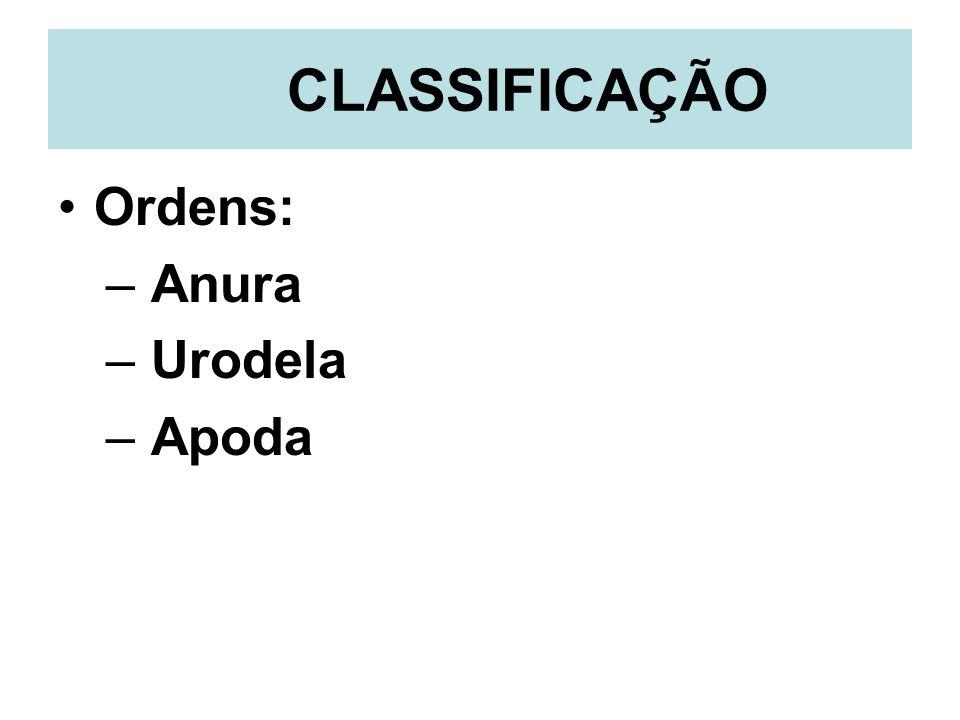 CLASSIFICAÇÃO Ordens: Anura Urodela Apoda
