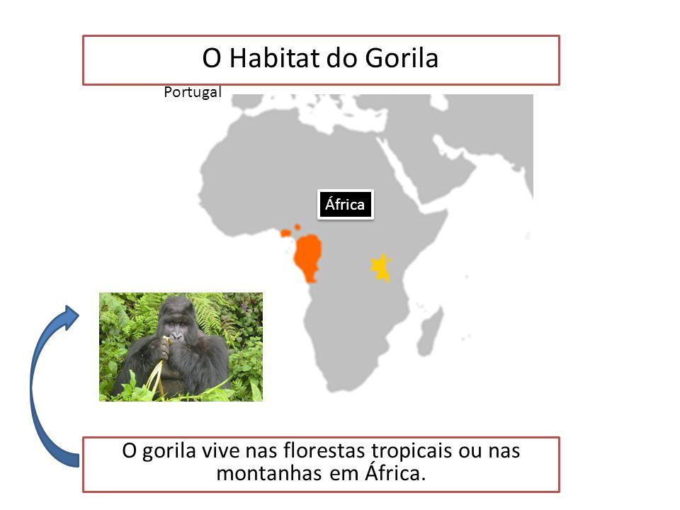 O gorila vive nas florestas tropicais ou nas montanhas em África.