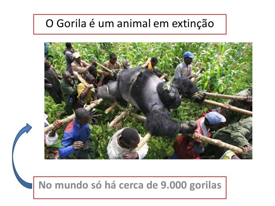 O Gorila é um animal em extinção