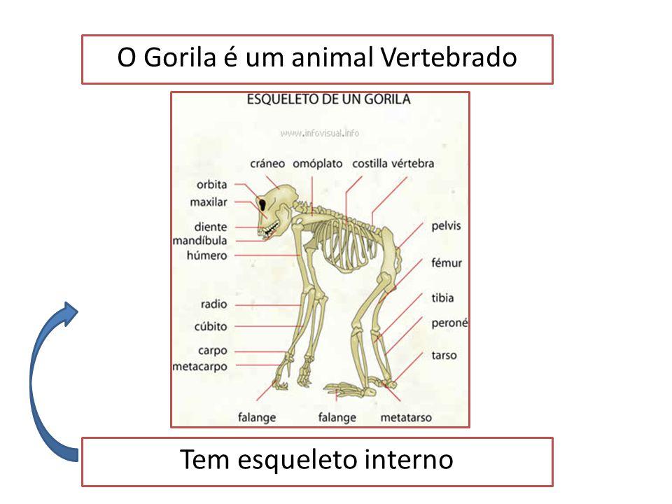 O Gorila é um animal Vertebrado