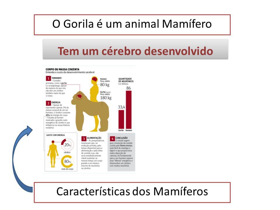 O Gorila é um animal Mamífero