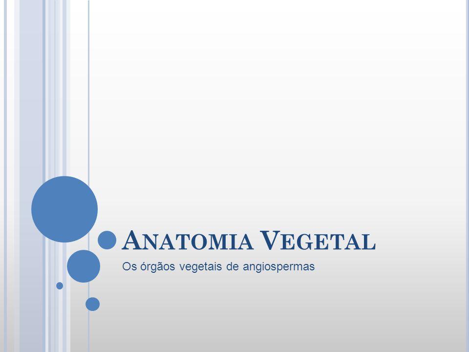Os órgãos vegetais de angiospermas