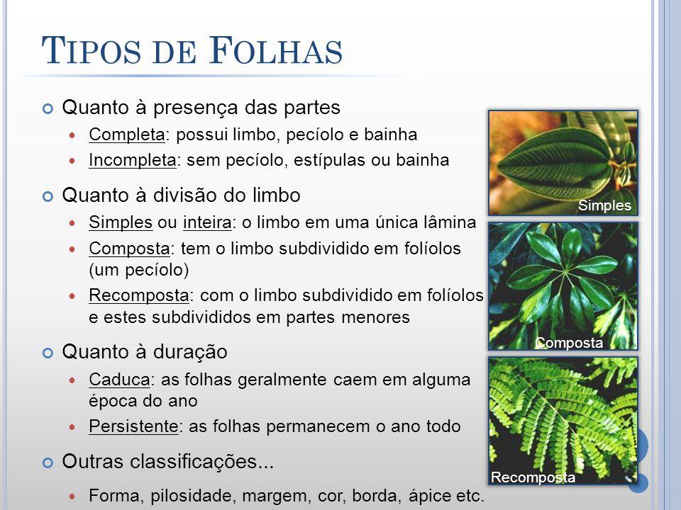 Tipos de Folhas Quanto à presença das partes Quanto à divisão do limbo