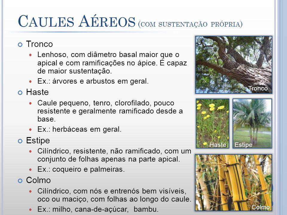 Caules Aéreos (com sustentação própria)