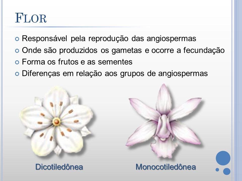 Flor Responsável pela reprodução das angiospermas