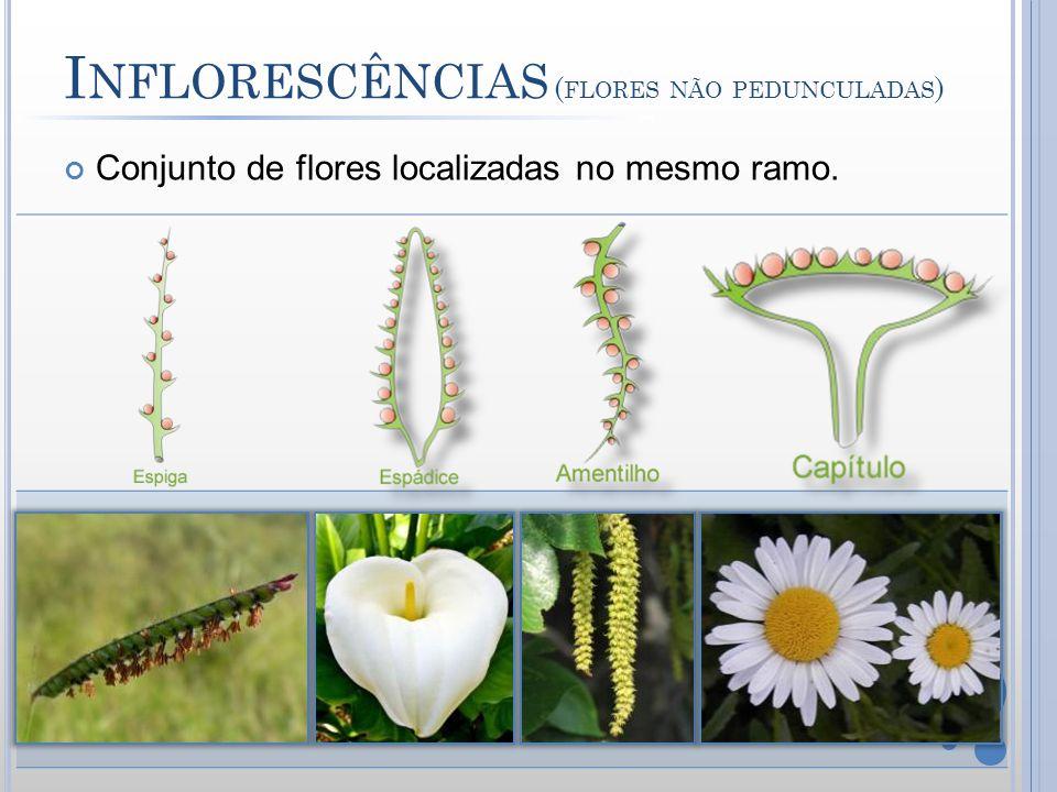 Inflorescências (flores não pedunculadas)