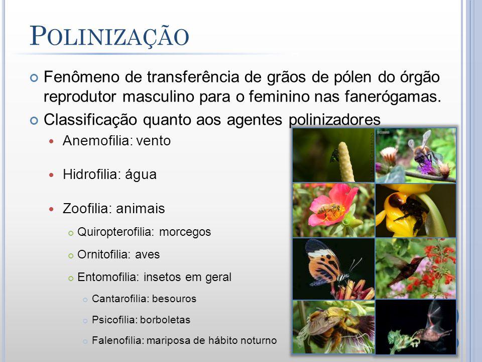 Polinização Fenômeno de transferência de grãos de pólen do órgão reprodutor masculino para o feminino nas fanerógamas.