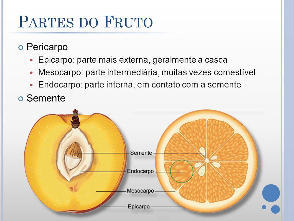 Partes do Fruto Pericarpo Semente