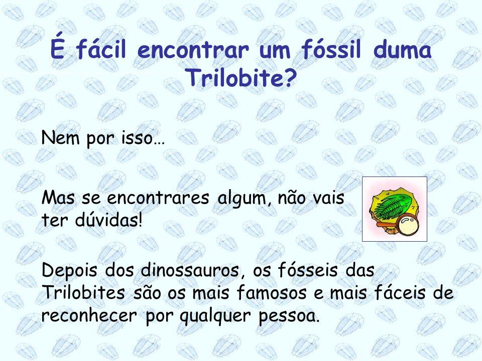 É fácil encontrar um fóssil duma Trilobite
