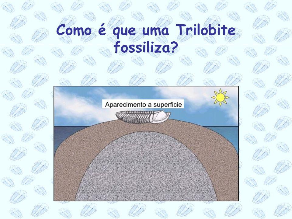 Como é que uma Trilobite fossiliza