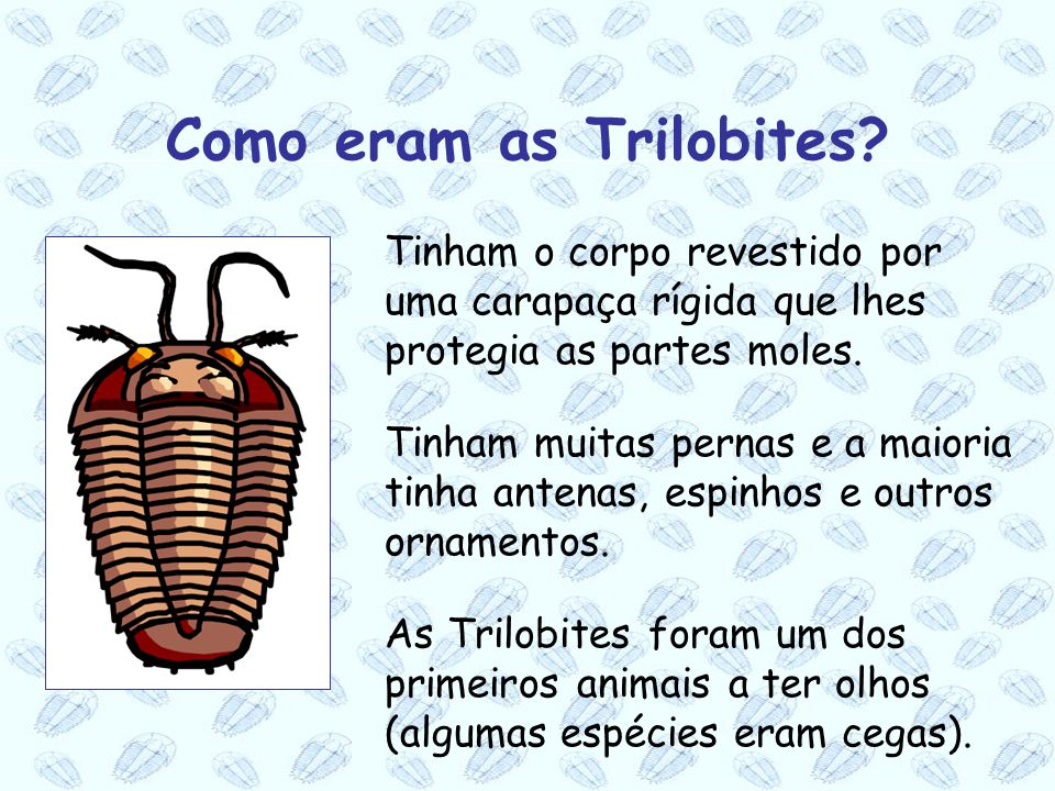 Como eram as Trilobites