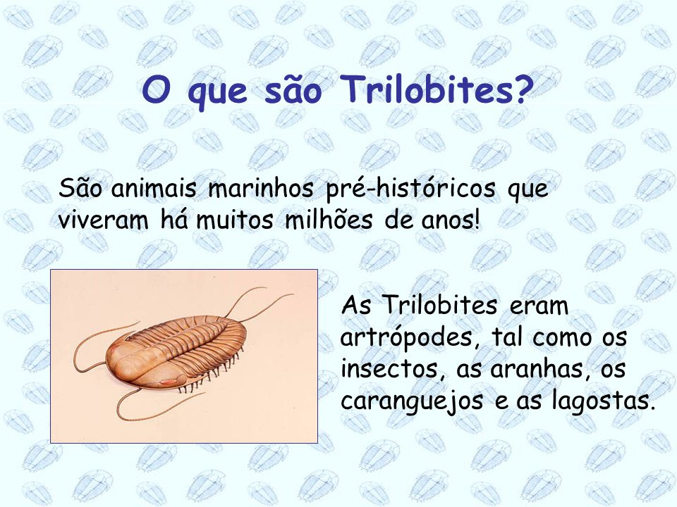 O que são Trilobites São animais marinhos pré-históricos que viveram há muitos milhões de anos!