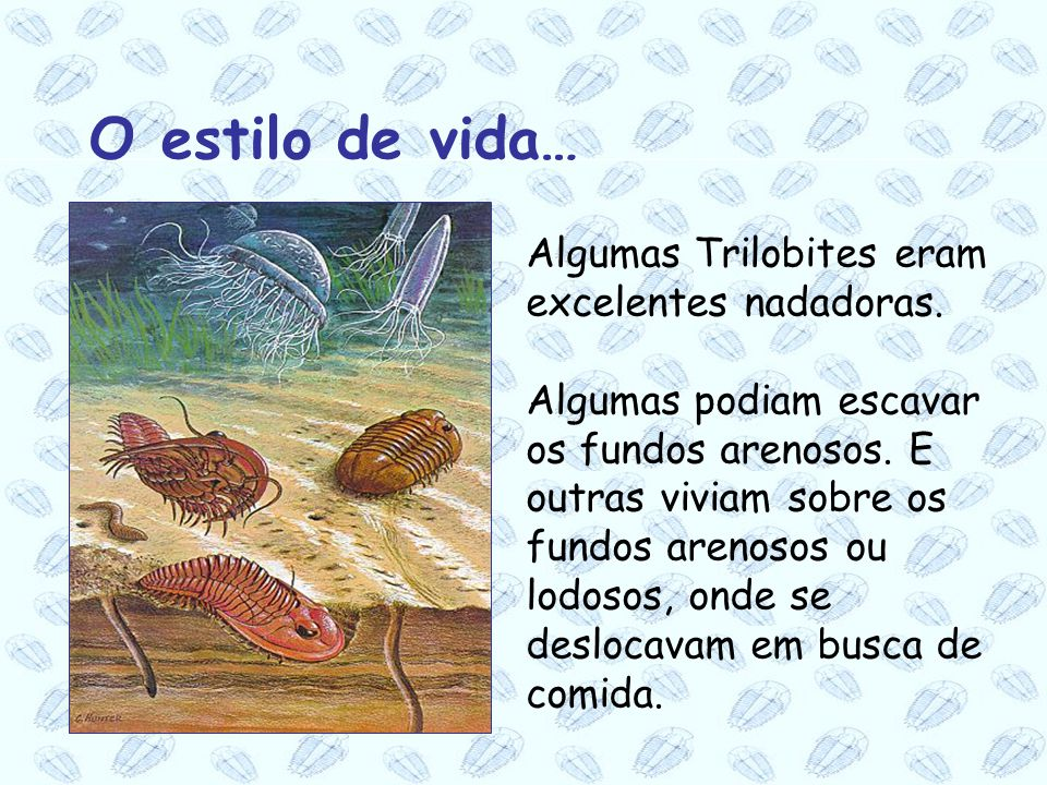 O estilo de vida… Algumas Trilobites eram excelentes nadadoras.