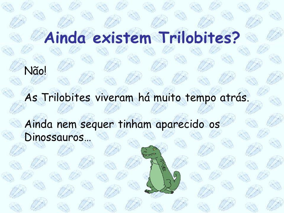 Ainda existem Trilobites