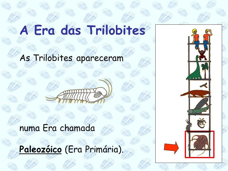 A Era das Trilobites As Trilobites apareceram numa Era chamada