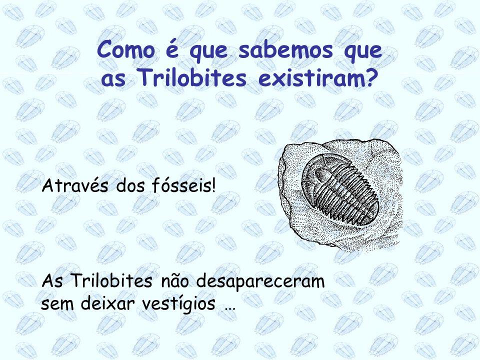 Como é que sabemos que as Trilobites existiram