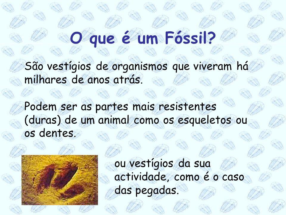 O que é um Fóssil São vestígios de organismos que viveram há milhares de anos atrás.