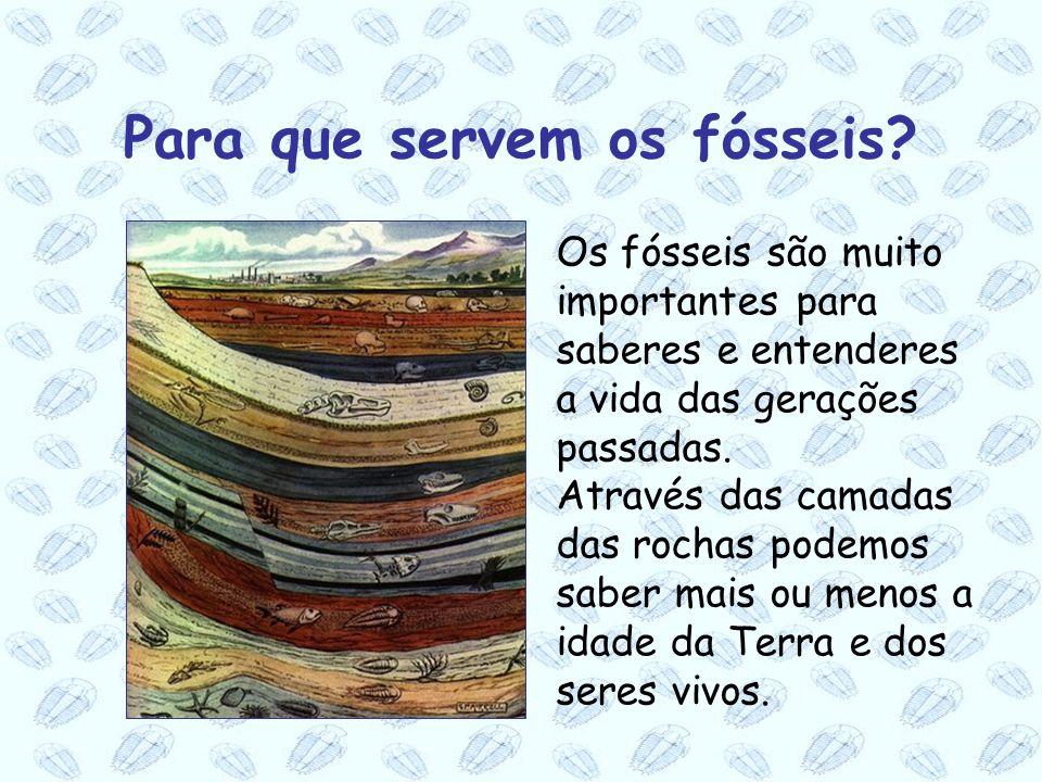 Para que servem os fósseis