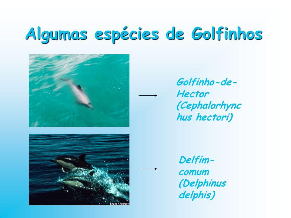 Algumas espécies de Golfinhos