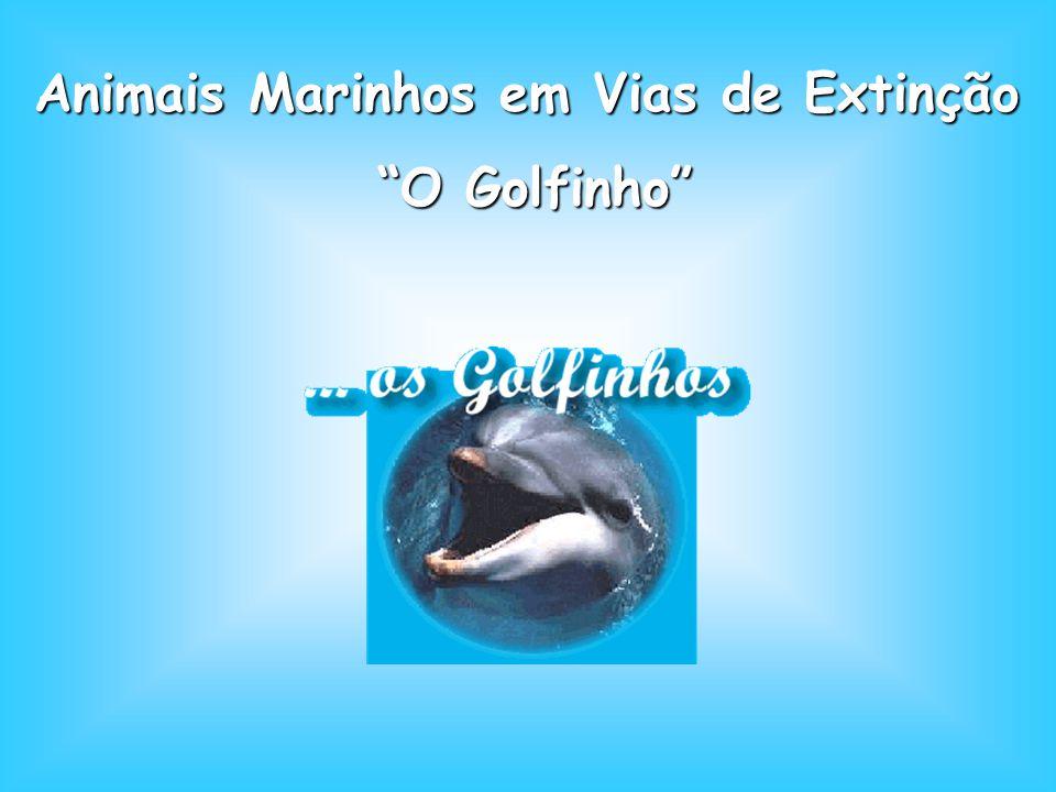 Animais Marinhos em Vias de Extinção