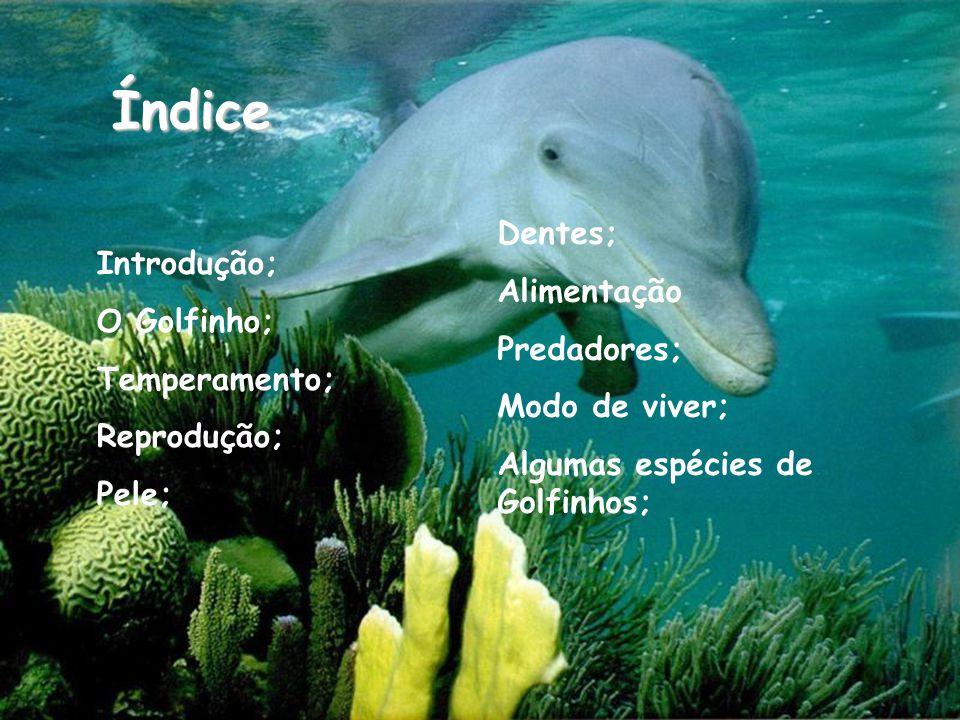 Índice Dentes; Alimentação Introdução; O Golfinho; Predadores;