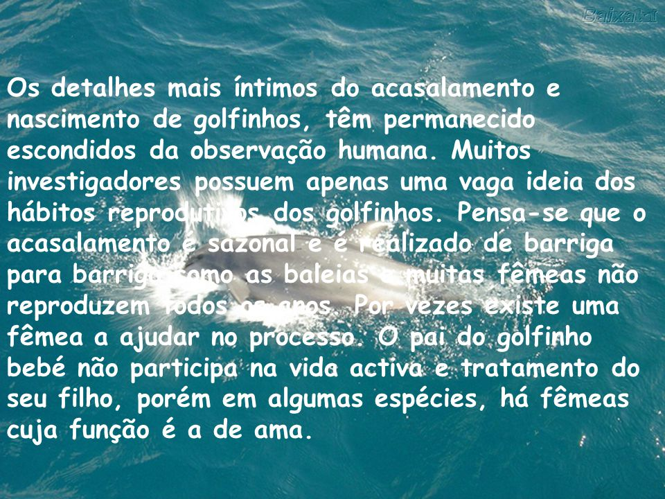 Os detalhes mais íntimos do acasalamento e nascimento de golfinhos, têm permanecido escondidos da observação humana.
