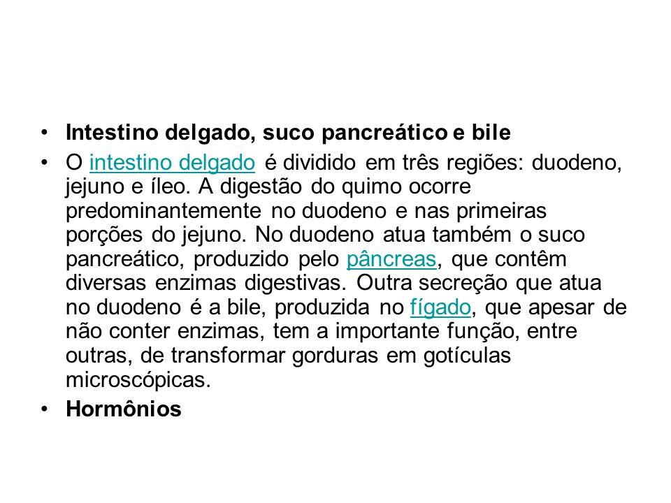Intestino delgado, suco pancreático e bile