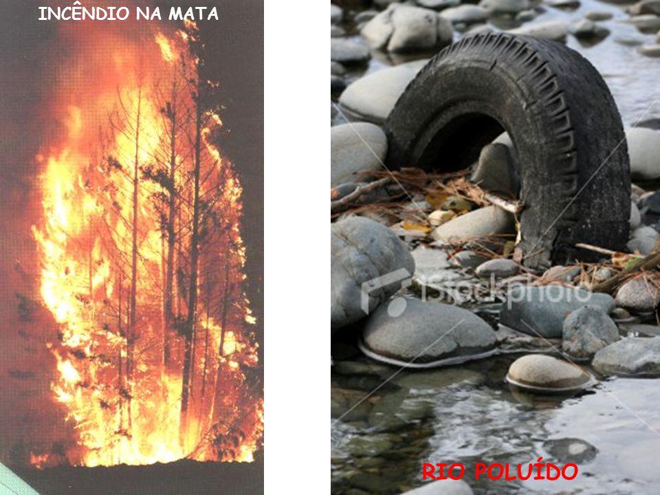INCÊNDIO NA MATA RIO POLUÍDO