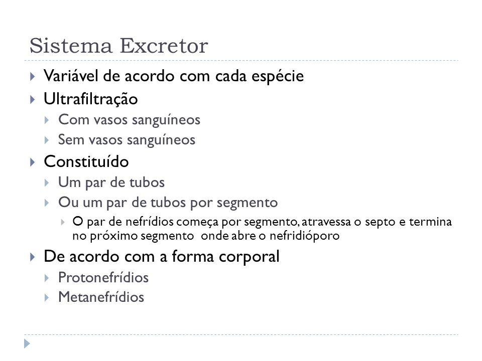 Sistema Excretor Variável de acordo com cada espécie Ultrafiltração